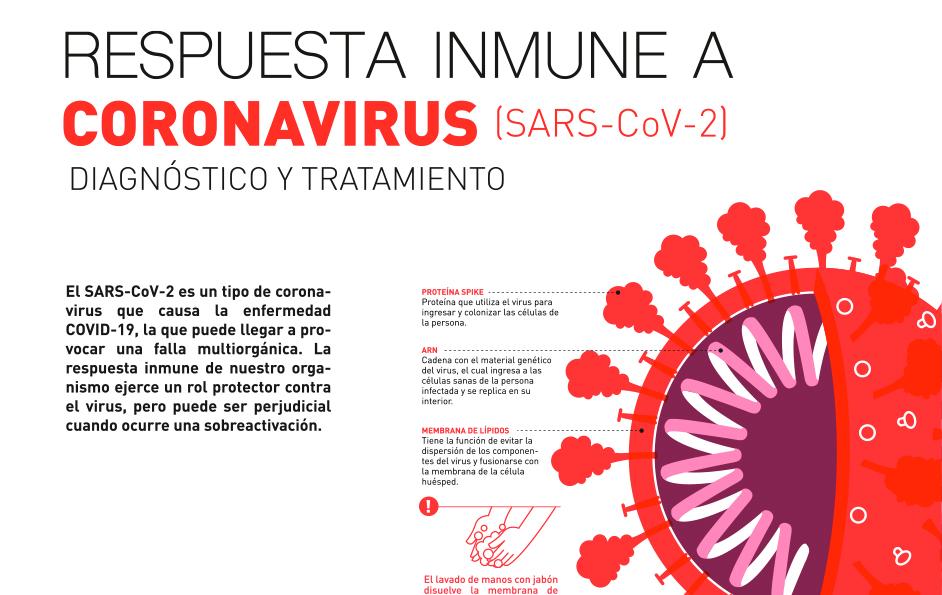 Respuesta inmune a Coronavirus SARS-CoV-2 graphic